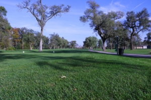 Green grass and winding paths at the Donald Ross Gold Course on a beautiful day